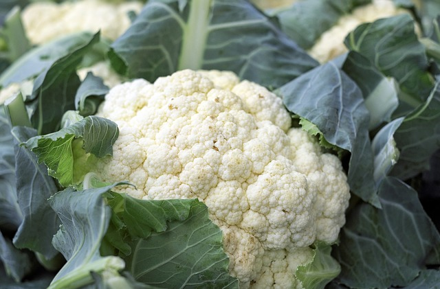 Can Dogs Eat Cauliflower?